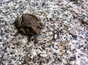 froggy alone