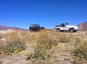 pair o jeeps